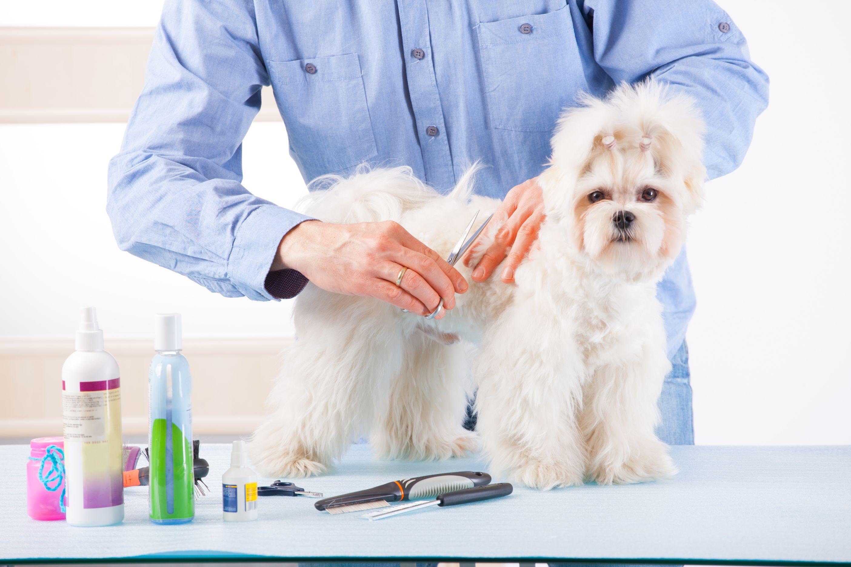 animal-grooming
