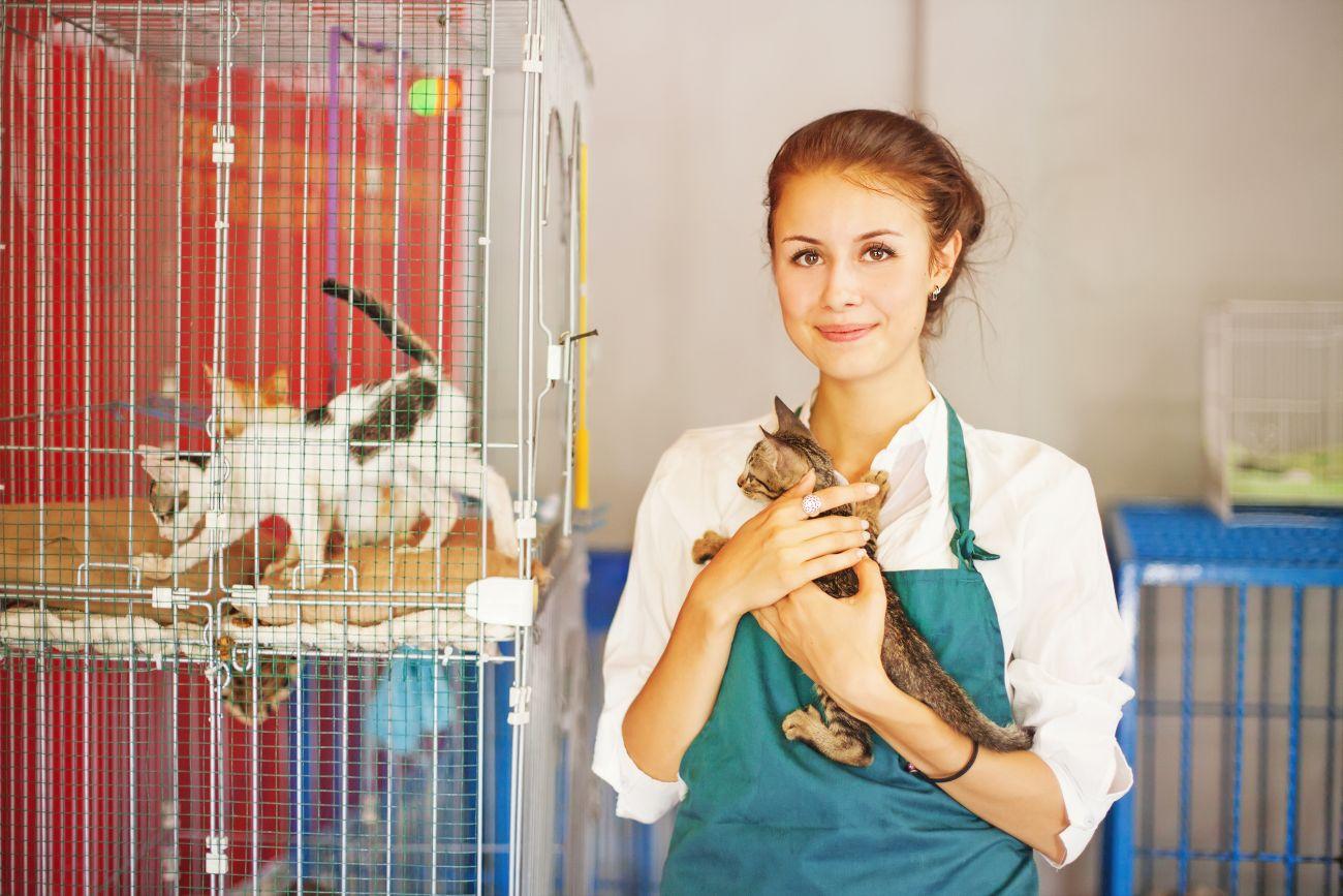 best-animal-shelters-boca-raton-fl-usa