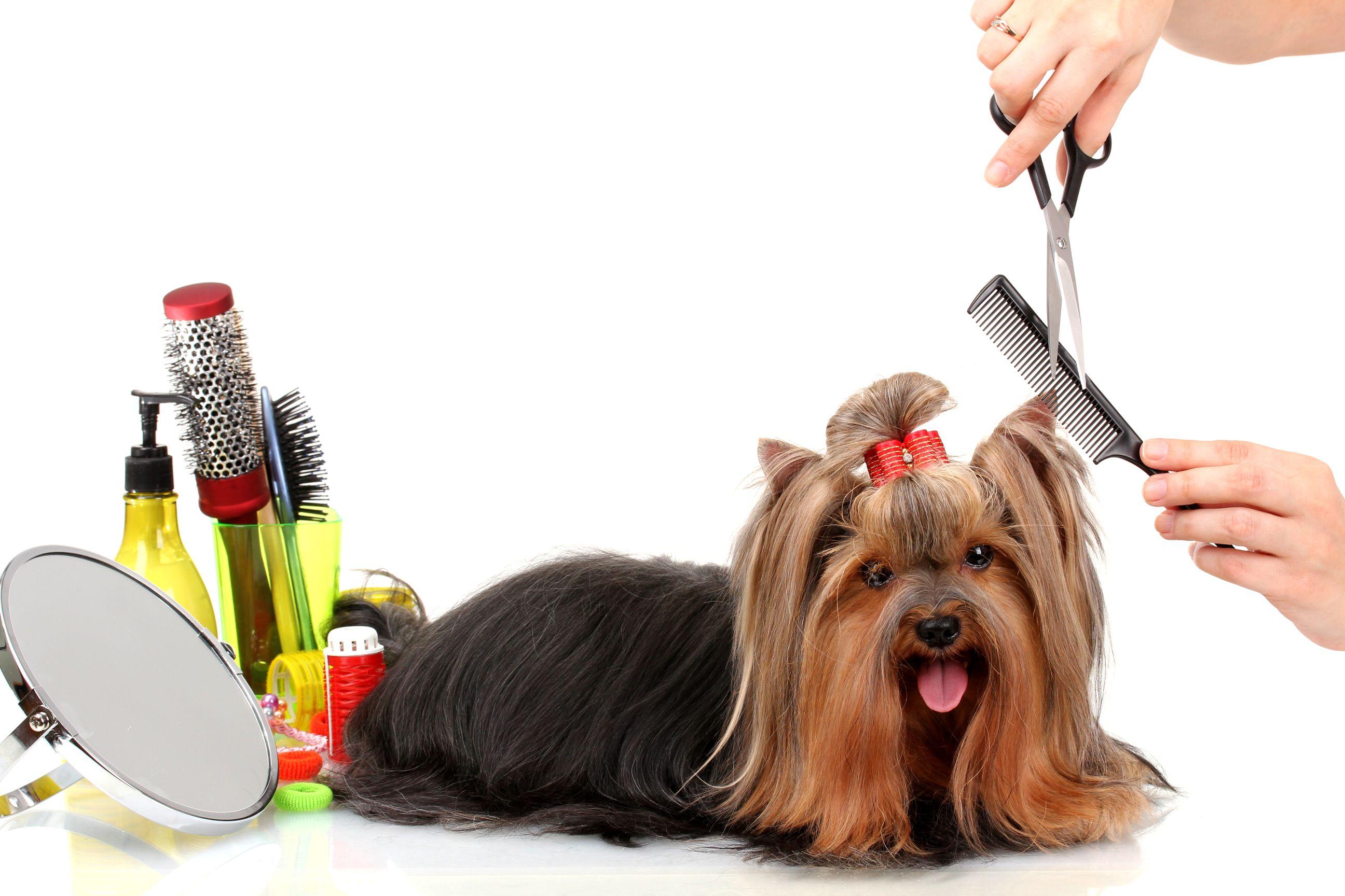 best-pet-grooming-winhall-vt-usa